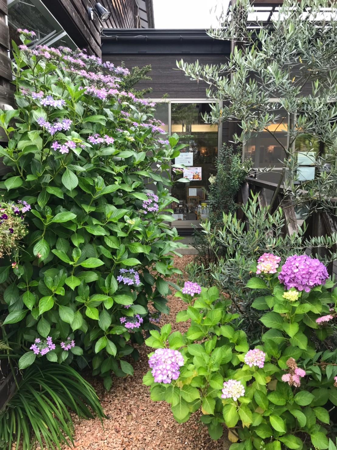 庭の花_190619_0008