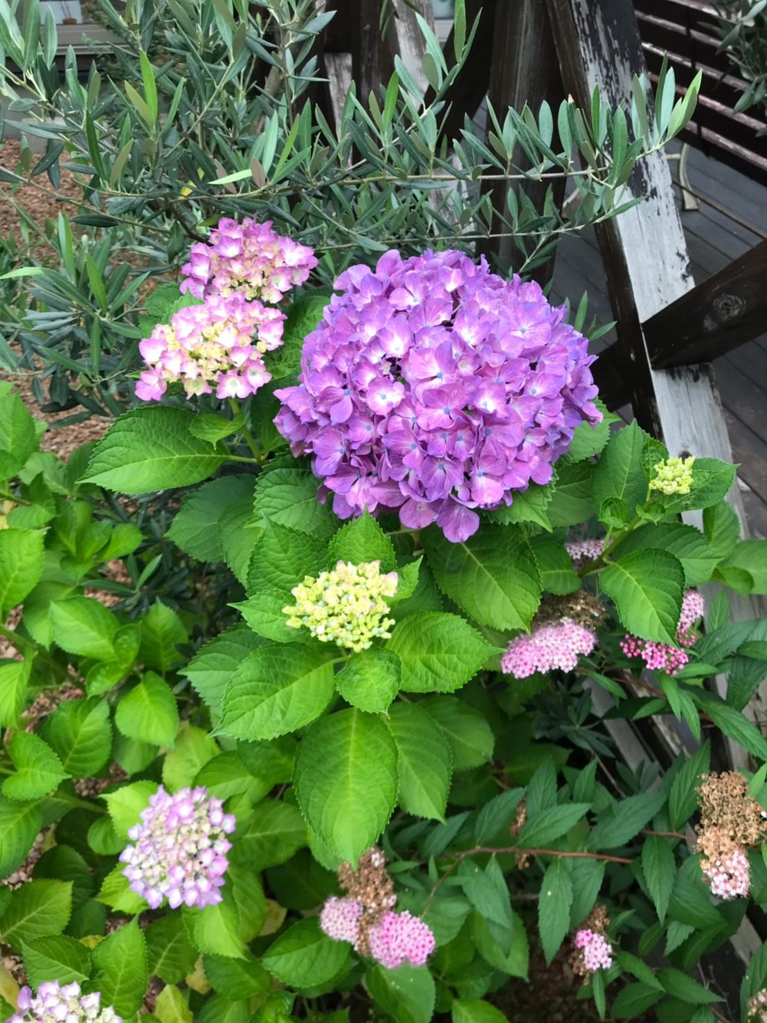 庭の花_190619_0009